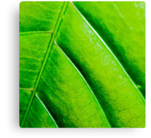 Macro shot of green leaf, nature pattern background Canvas Print