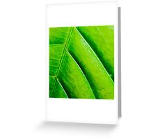 Macro shot of green leaf, nature pattern background Greeting Card