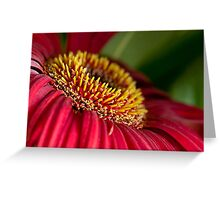 Red gerber daisy stamens Greeting Card