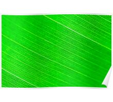 Macro shot of green leaf, nature pattern background Poster