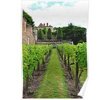 Vineyard Poster