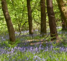 Bluebell Wood Sticker