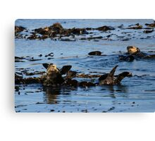 PACIFIC SEA OTTERS Canvas Print