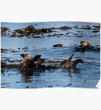 PACIFIC SEA OTTERS Poster