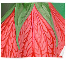 Tropical Flower Green and Coral Poster