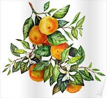 Tangerine Branch Poster