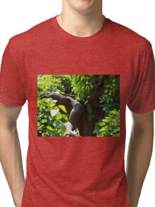 The old mulberry tree Tri-blend T-Shirt