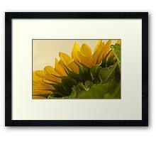 Sunshine Under The Petals  Framed Print