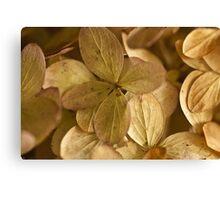 Hydrangea Petals - Macro  Canvas Print