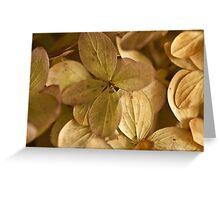 Hydrangea Petals - Macro  Greeting Card