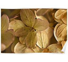 Hydrangea Petals - Macro  Poster