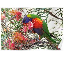 Rainbow Lorikeet ~ Breakfast Poster