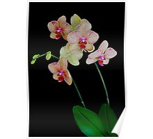 ORCHID1024 Poster