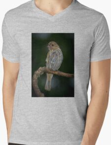 House Finch Mens V-Neck T-Shirt