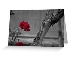 Red Rose in BW Greeting Card