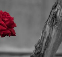 Red Rose in BW Sticker