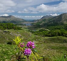 Ladies View Co. Kerry by Martina Fagan