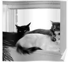 Window Sill Cats Poster