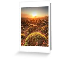 Gawler Ranges sunrise Greeting Card