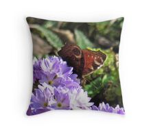 Peacock Butterfly on Drumstick Primroses Throw Pillow