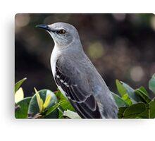 State Bird Northern Mockingbird Canvas Print