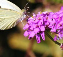 White Cabbage Butterfly Sticker