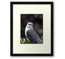 Looking at Me? Framed Print