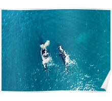 Whales off Lurline Bay Poster