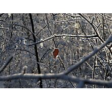 Sole leaf in bare snow-covered trees Photographic Print