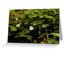 Wood Sorrel, Ness Woods, County Derry Greeting Card
