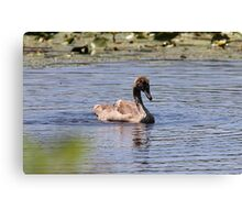 A most precious ugly duckling Canvas Print