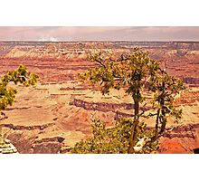 Grand Canyon National Park- Arizona Photographic Print