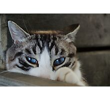 Blue eyed beauty Photographic Print