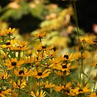 Black Eyed Susans by Linda  Makiej Photography