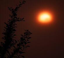 Foggy Sunset by Hannah Saveall