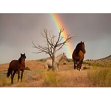Rainbow's End Photographic Print