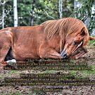 Arabian Quarterhorse Pony Asleep by Skye Ryan-Evans