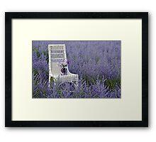 Russian Sage Framed Print
