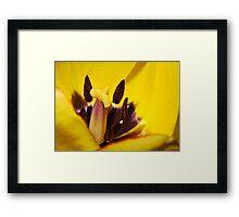 Macro red edged Picotee yellow Tulip Framed Print