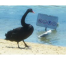 Wish I could read !! - Black Swan said to Seagull - Sanctuary Lakes Vic. Photographic Print