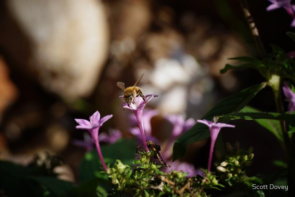 Bee on Flower by Scott Dovey