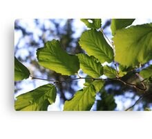 Leaves on the wind, See them fly. Canvas Print
