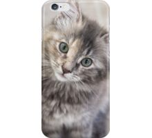 Curious Kitten iPhone Case/Skin