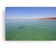 Shark Bay Canvas Print
