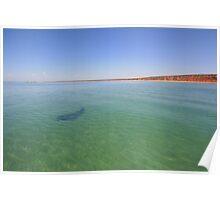 Shark Bay Poster
