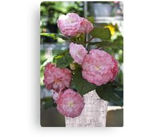 Pretty Pink Potted Begonias  Canvas Print