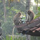 Bali Monkeys Divide Stolen Goods by Keith Richardson