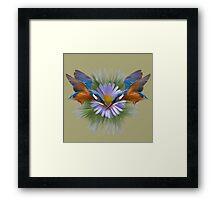 Kingfisher diving Framed Print