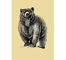 The Great Bear - A fierce protector Photographic Print