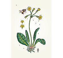 yellow cowslip and bee Photographic Print